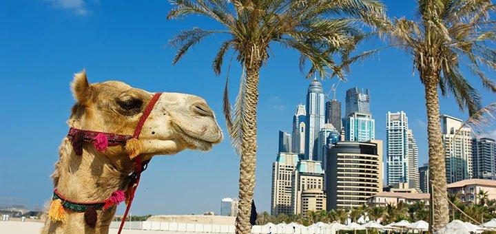 Скидка 1000 грн на участие в программе «Работай и путешествуй за границу (Катар и Оман)»