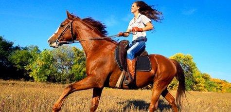 Horse-large