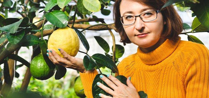 Скидка 50% на лимонное деревце!