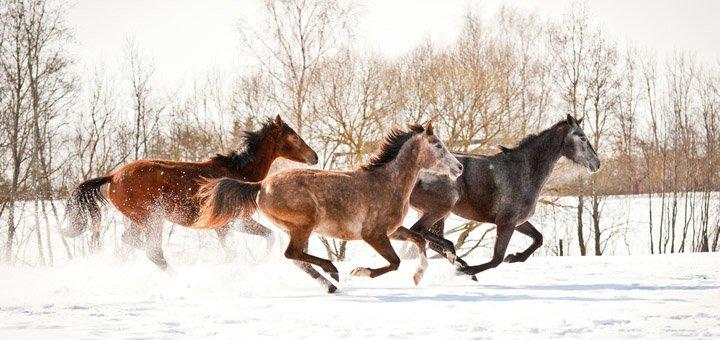 Скидка 70% на уроки верховой езды и прогулки по лесу на лошадях в клубе «Серебряная подкова»