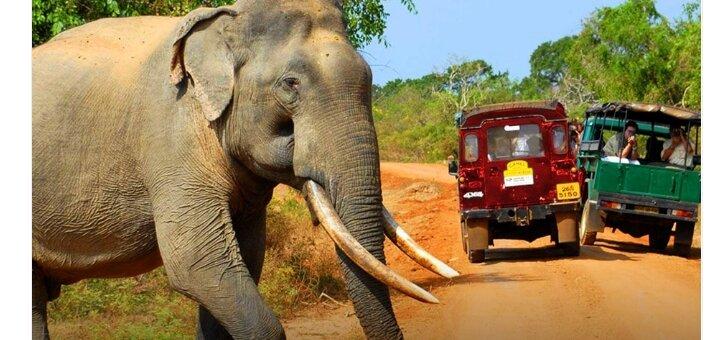 Скидка до 5% на тур на Шри Ланку от «Соната»